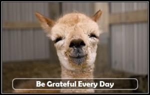 grateful-baby-llama